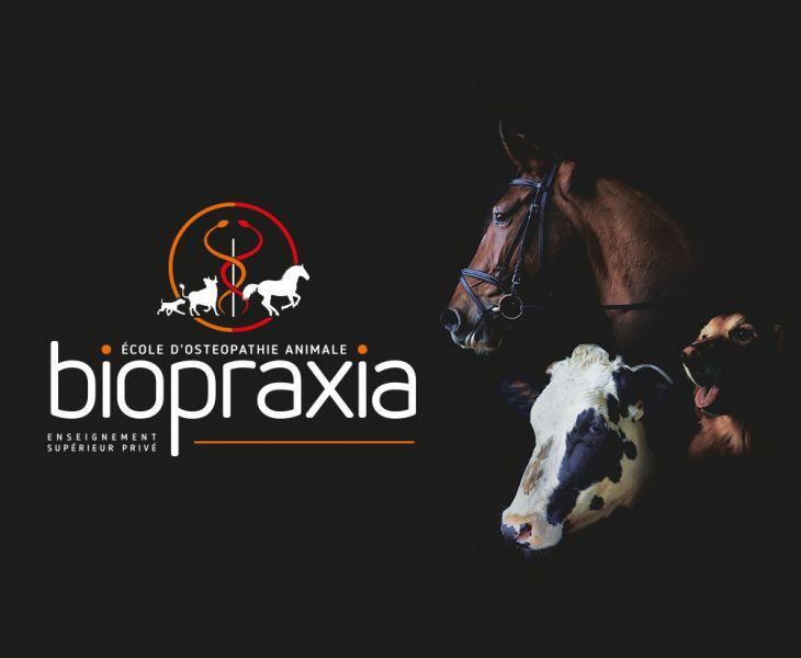 rebouteux, formation, ostéopathie équine